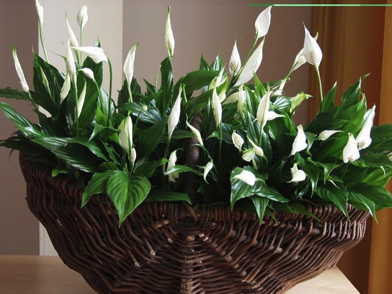 Зеленые экстремалы: 10 растений, которые выдержат испытание засухой и холодом Источник: domik.ua
