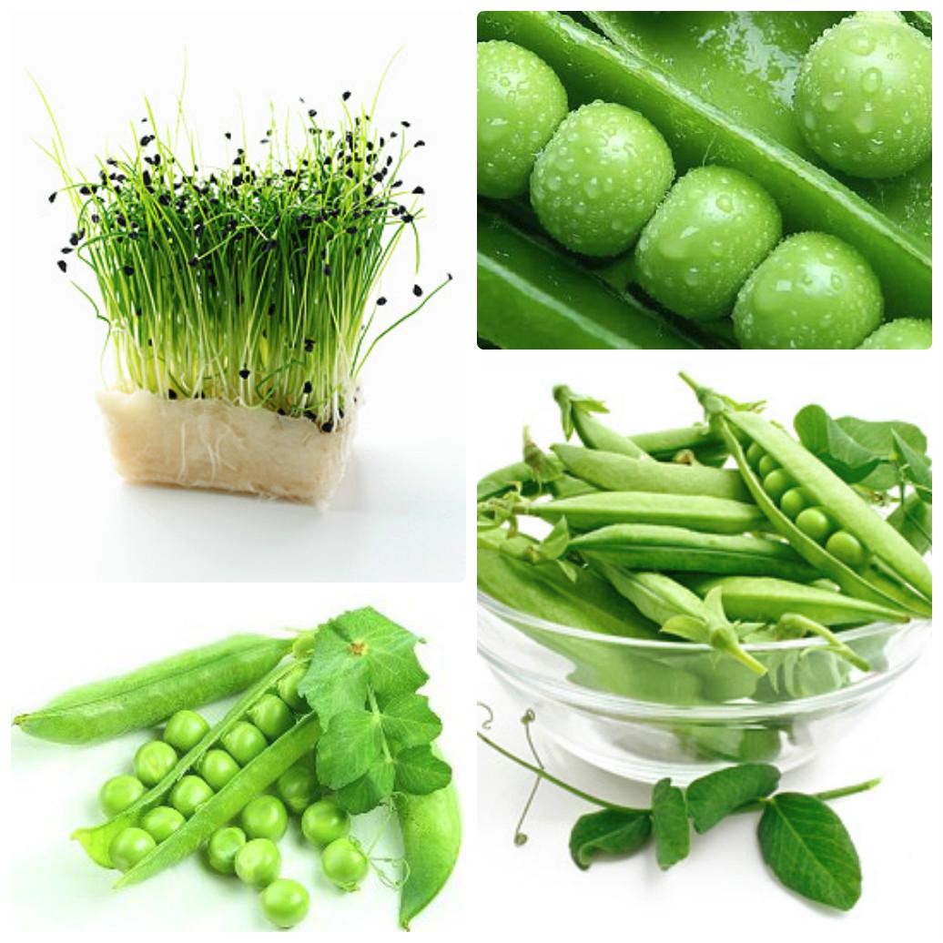 Вырастить зеленый горошек в домашних условиях