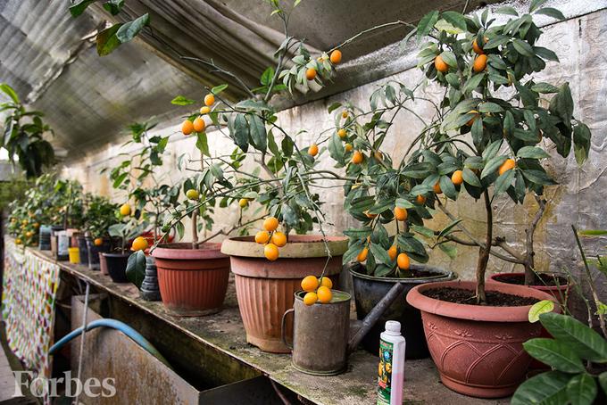 Совкомбанк какой экзотический фрукт можно вырастить в квартире диваном помешает