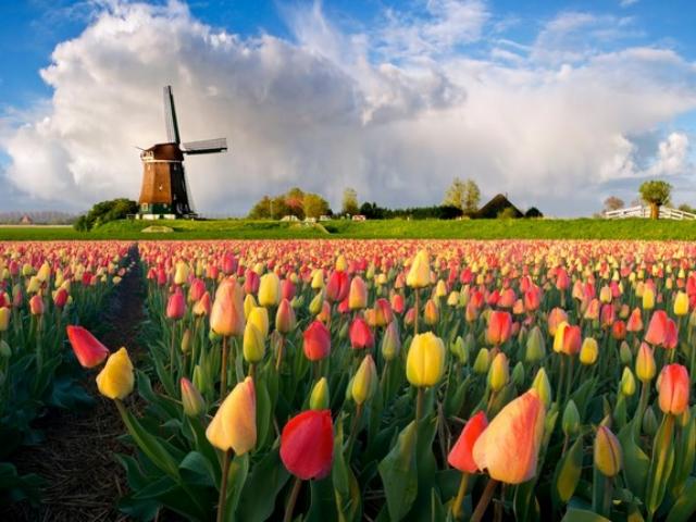 Подложат ли Нидерланды свинью Украине?