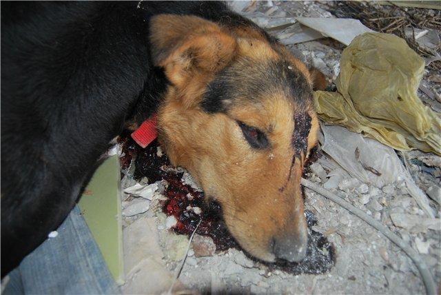 мультфильм про убийцу собаку