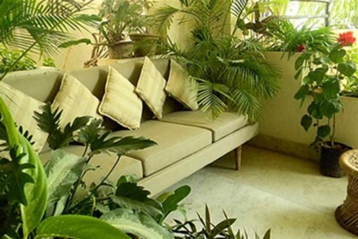 Комнатные цветы зелень