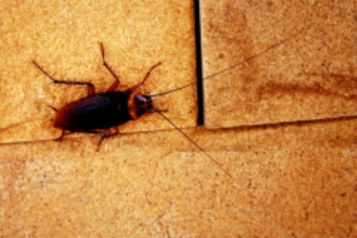как можно избавиться от паразитов в организме